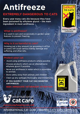 antifreeze is extremely dangerous to cats